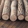 twig-pencils-bulk